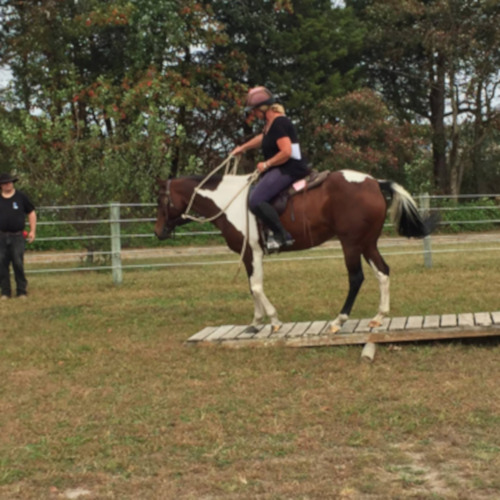 Changing Fates Equine Rescue Obstacle Course