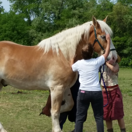Changing Fates Equine Rescue Open House